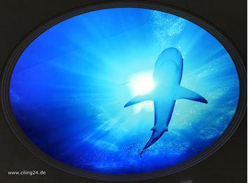 bedruckte-lichtdecke-hinterleuchtet-motiv-hai